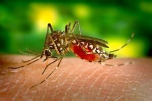 Zika, portada