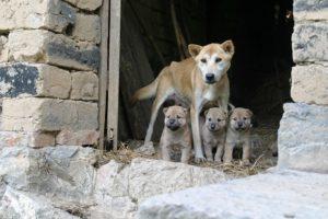 Costesía Pixabay. Mascotas Adoptadas Cuidadoras de Salud Mental
